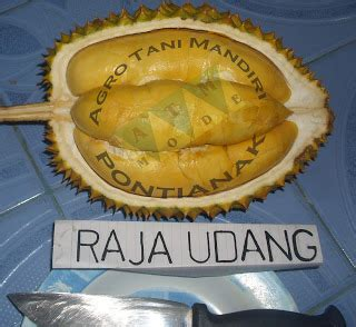 Harga Bibit Durian Terong agro tani mandiri