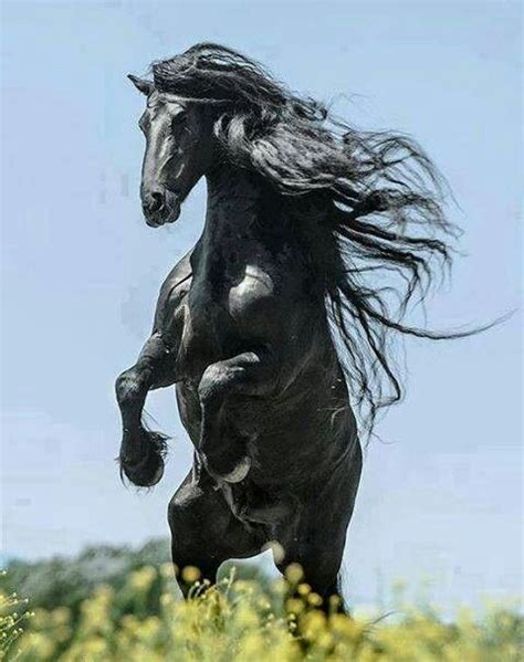 testo only the horses 396 best rearing 2 images on beautiful