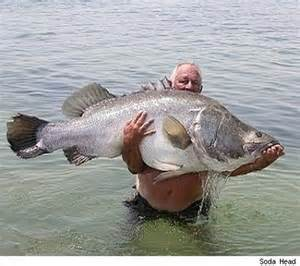 my funny amazing catch big fish caught by fisherman