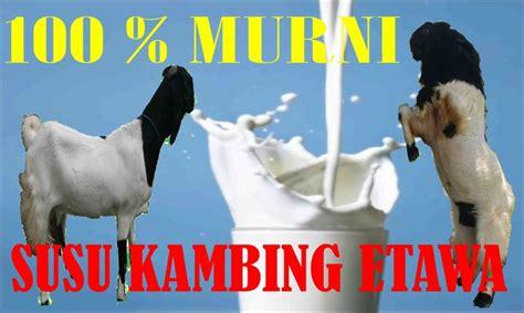 Bibit Kefir Di Surabaya magic of kefir kambing etawa jual bibit kefir di