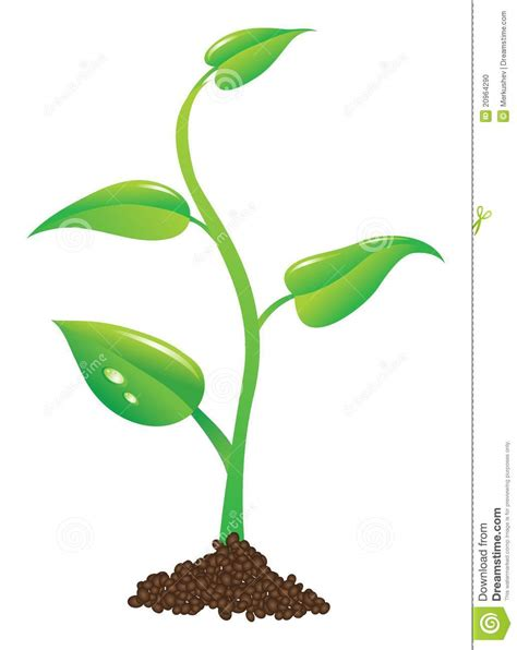 potted plant clipart clipart suggest
