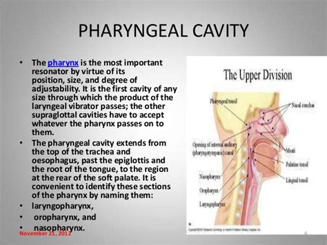 3 sections of the pharynx three sections of the pharynx nasopharyngeal carcinoma