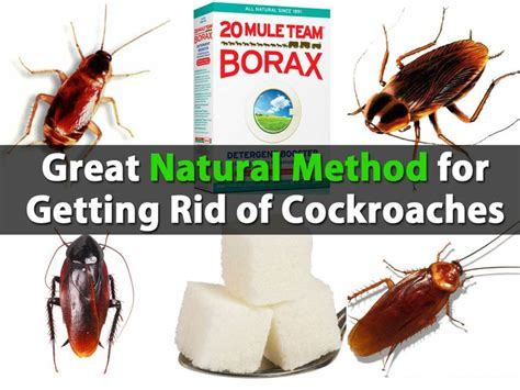 Why Do I Roaches In Clean House by 1000 Images About Cleaning On Roaches Home