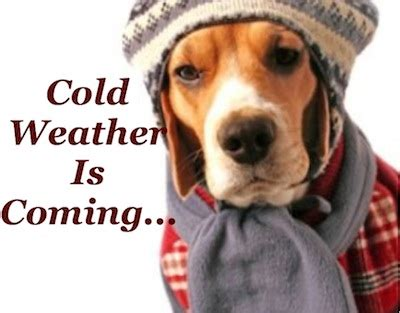what temperature is cold for dogs cold weather safety tips for pets pet community center