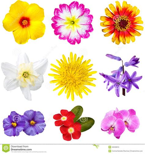 Cut Out Top Flower colorful flowers cutouts stock image image of flower