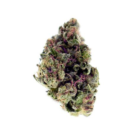 x strain seeds purple x og kush autoflowering by fatbush seeds