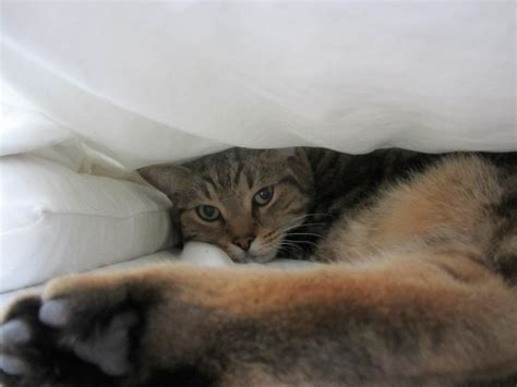 8 Places Cats Like To Sleep by Places Cats Sleep
