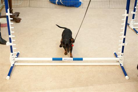agility classes agility classes doggie academy in new york