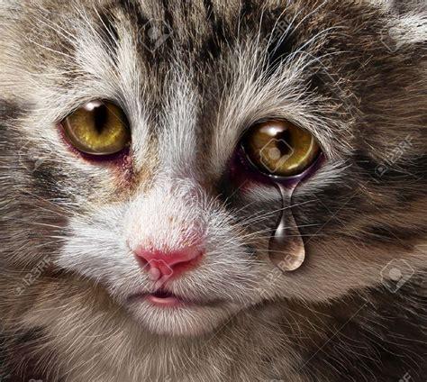 imagenes de gatitos llorando tierno gatito llorando solo queria jugar youtube