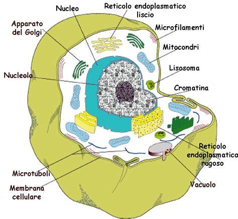 test sulla cellula la cellula animale test scuola