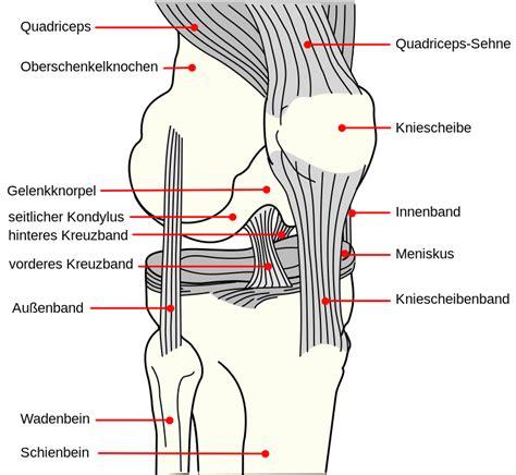diagram of the knee file knee diagram de svg wikimedia commons