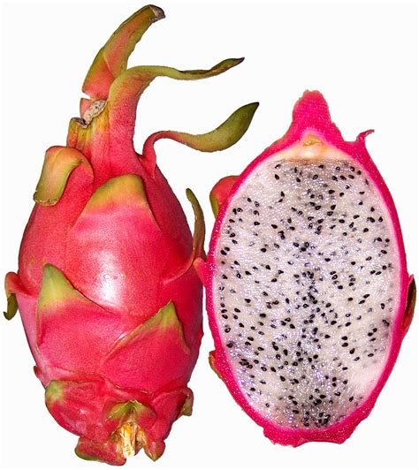 file hylocereus undatus red pitahaya jpg simple english wikipedia the free encyclopedia