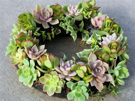 Mountain Crest Gardens by Pin By Mountain Crest Gardens On From The Nursery