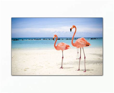 Sprei 200 200 20 Animals Pink Biru Katun Panca 17 best images about pink flamingo on organic baby baby and deko