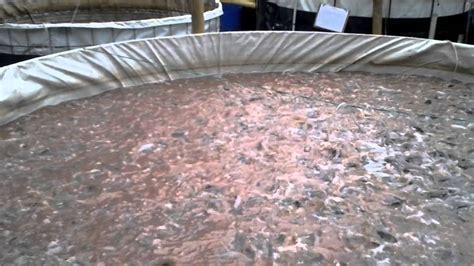 Pakan Ikan Lele Bioflok bioflok lele indobeta