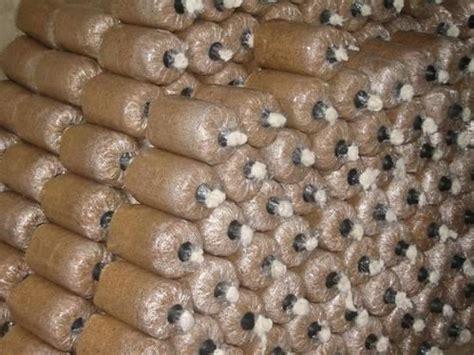 Bibit Jamur Tiram Murah jual bibit jamur tiram harga murah sukabumi oleh toko