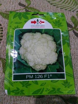 Panah Merah Kembang Kol Pm 126 F1 250 Seeds Paling Murah jual benih bunga kol pm 126 isi 250 kualitas terbaik