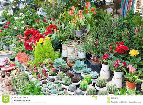 indoor plants for sale indoor plants for sale stock photo image 44324116