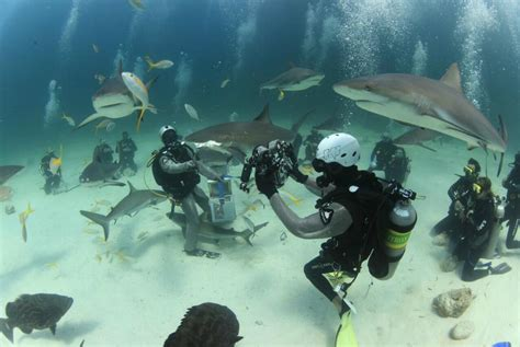 dive shark two tank shark dive island routes