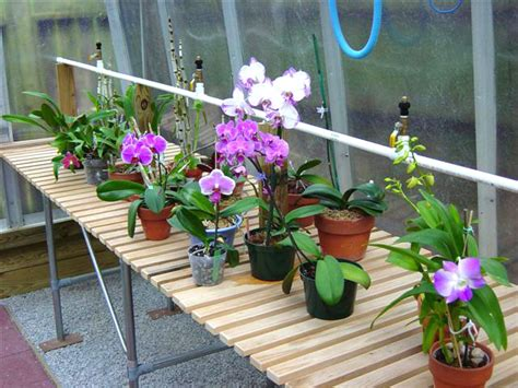 orchid bench t2w wide area mist nozzle turner greenhouses