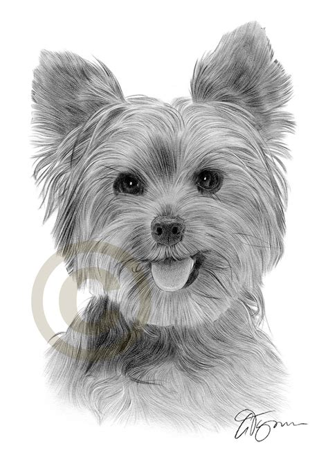 how to paper a yorkie puppy terrier pencil drawing print a3 a4 sizes signed artwork ebay