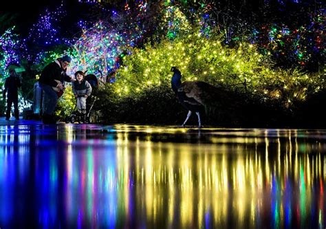 Where To See Holiday Lights In Seattle The Seattle Times Woodland Park Zoo Lights