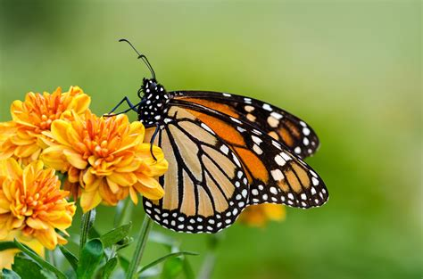 landscaping birmingham al landscaping birmingham al how to attract butterflies