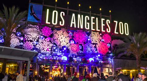 festive lights discount code promo code for lights festival 28 images features