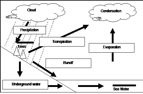 Hydrologic Cycle Worksheet by The Water Cycle Worksheet Answers