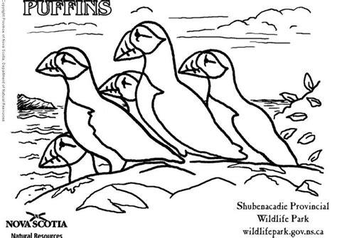 coloring pages of newfoundland papagaio para colorir az dibujos para colorear
