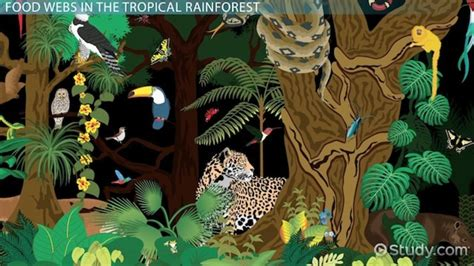 amazon cooking the tropical rainforest food web video lesson