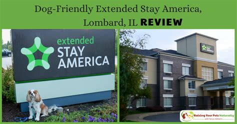 friendly hotels chicago pet friendly hotels in chicago metro friendly lombard hotel extended stay review