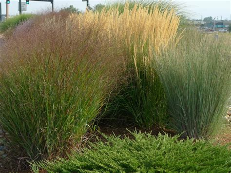 grass for backyard landscaping grasses for backyard bistrodre porch and