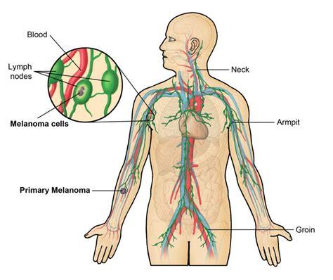 lymph nodes printable lymph node diagrams diagram site