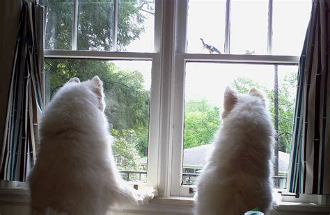 how do dogs see cog 101 as spiritual practice