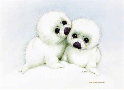 imagenes de focas blancas focas arpa especie en peligro de extinci 243 n