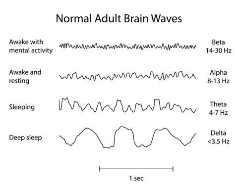 Five Stages Of Sleep Essay by Sleeping And Dreaming Kidspressmagazine