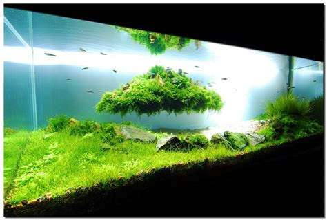 setting aquascape floating island planted tank by gary wu plantedaquarium