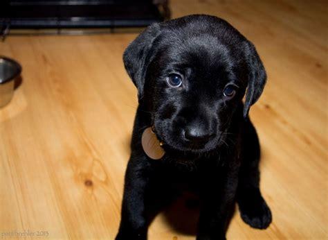 black names puppies black names puppy litle pups