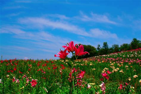 wallpaper flower view hd nature wallpapers view natural images flowers mac