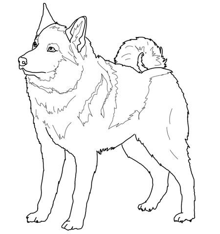 coloring pages of coon dogs redbone coonhound coloring page coloring