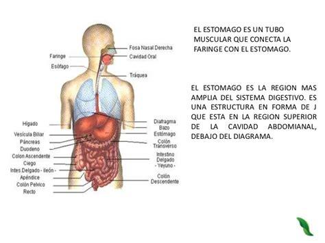 el sistema digestivo y sus organos el cuerpo humano identifica los organos que conforman el aparato digestivo