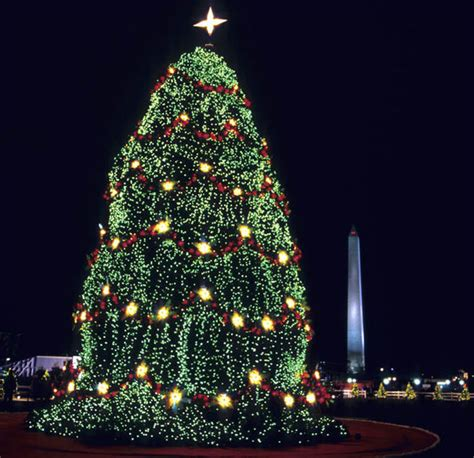 how many lights for tree collection of how many lights tree best