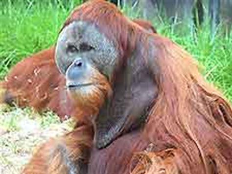 discount vouchers perth zoo perth family attractions perth western australia wa