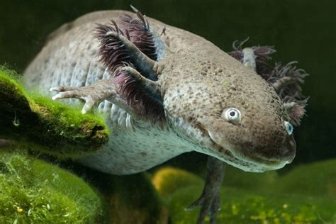 real or fake 8 bizarre hybrid animals live science 10 real animals that seem make believe howstuffworks