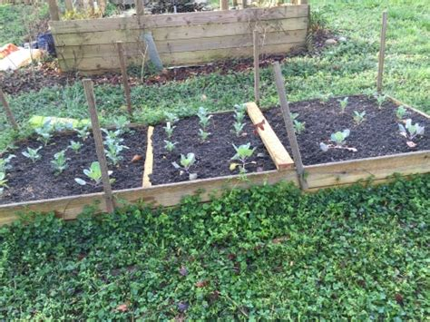 raised bed soil raised bed filling with bagged products walter reeves