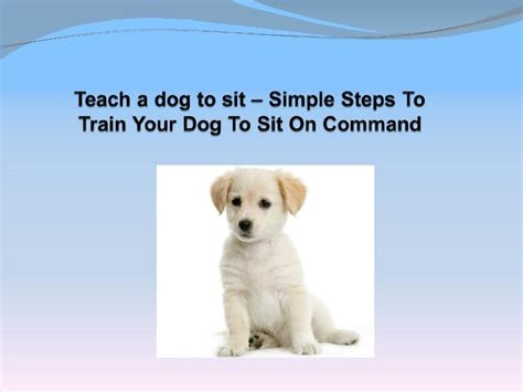 how to teach a puppy to sit teach a to sit