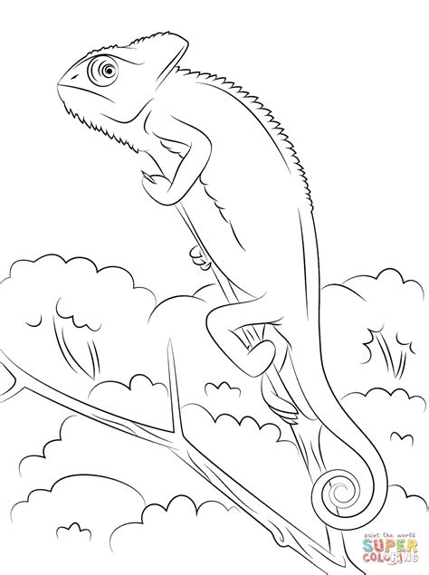 Veiled Chameleon Coloring Page Free Printable Coloring Pages Chameleon Coloring Pages Printable