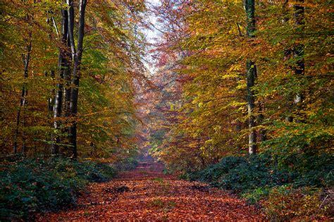 imagenes naturaleza otono fondos de pantalla estaciones del a 241 o oto 241 o bosques