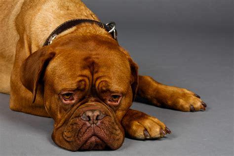 cassetta per cani cosa deve contenere la cassetta pronto soccorso per cani